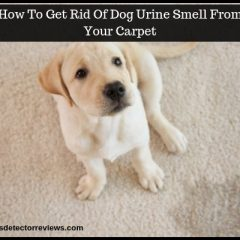 How To Get Rid Of Dog Urine Smell From Your Carpet-Simple Tips