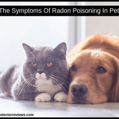 The Symptoms Of Radon Poisoning In Pets-Everyone Must Know ✅