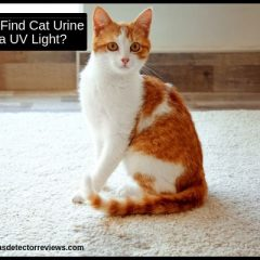 How to find cat urine with a UV light?