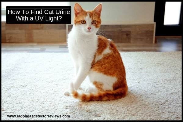 how-to-find-cat-urine-with-a-uv-light